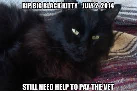 cremation costs fundraiser by helen davis black s vet bills cremation costs
