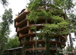 cool tree houses popular the best tree house cool gallery ideas 4416