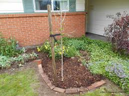 little homestead in boise how to add a fruit tree to your