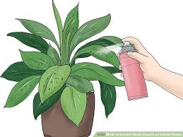 how to control scale insects on indoor plants 7 steps
