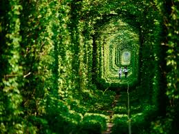 world of love wallpapers tunnel of love in ukraine world tourism travel 9933 wallpaper