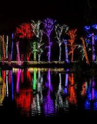 phoenix zoo lights tickets win a zoolights family fun pack at the phoenix zoo