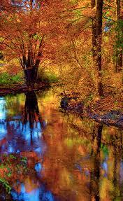 fall foliage autumn michigan usa leaves