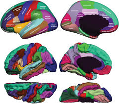 The Anatomy Of The Human Brain Frontiers 101 Labeled Brain Images And A Consistent Human