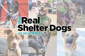 the real shelter dogs of new jersey unleashed
