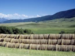 montana agriculture stakeholders lowdown climate change