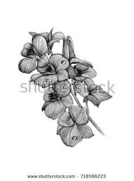 flower sketch bouquet hand drawing by stock illustration 651905896