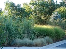 grass lawn alternatives for an eco friendly backyard gilmour