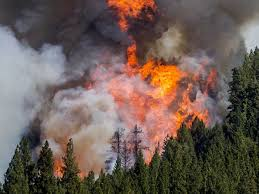 Wildfire Honey by Photos Of California Wildfire Near Sacramento Business Insider