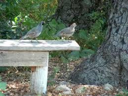 Building A Garden Bench Seat How To Build A Simple Easy Garden Bench Or Seat