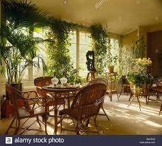 cane chairs and tables with potted palm and tall green climbing