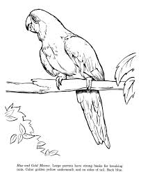 printable zoo animal coloring pages 459 best animals coloring pages images on pinterest coloring