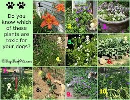 the challenges of gardening with dogs u2013 are your plants safe part