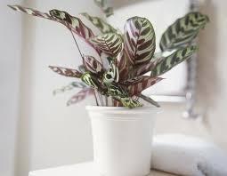 house plants that don t need light 10 houseplants that don t need sunlight leedy interiors