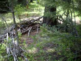 Natural Hunting Blinds How To Build A Ground Blind For Bear Hunting