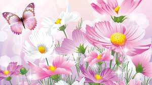 fresh tag wallpapers springtime pure field feeling daisies