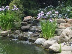 Retention Pond In Backyard Simple Aquascaping Of Your Retention Pond Using Native Plants