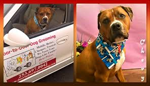 discount mobile dog grooming puyallup tacoma auburn u0026 beyond