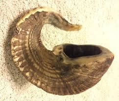 shofar horn for sale shofar sale shofar the sound of covenant