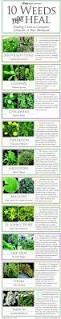 best 25 the weeds ideas on pinterest weeds in lawn garden