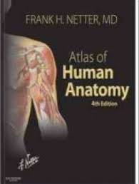 Essentials Of Human Anatomy And Physiology Book Online Atlas Of Human Anatomy 4th Edition Free Ebook Online Anatomy