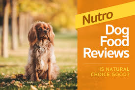 nutro dog food review is natural choice good 2017 rating