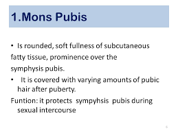 mons pubis hair anatomy of female reproductive system ppt video online download