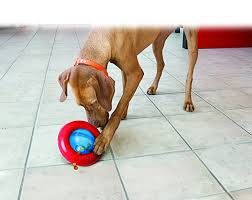 Pet Supplies KONG Gyro Dog Toy Amazon