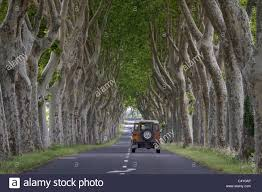 car driving down a beautiful tree lined road near lagrasse in the