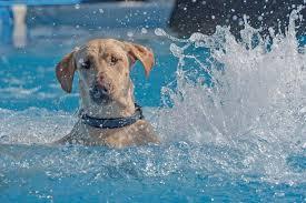 si e psa utopił się ratując psa zdjęcia se pl