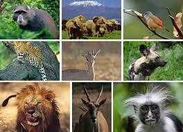 African Safaris Camelot World Travel