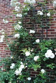 19 best plants images on pinterest flowers garden garden ideas