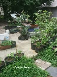 How To Plant A Vegetable Garden In Your Backyard by Container Vegetable Gardens For Small Spaces The Gardening Cook