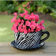 12 cheap ideas for garden in a tea cup that you will definitely