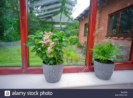Room With Plants Conservatory With Plants Room In House Next To Garden Stock Photo