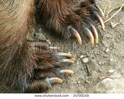grizzly claws grizzly claws kenai alaska usa stock photo 34700149