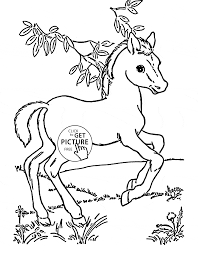 cute baby horse coloring page for kids animal coloring pages