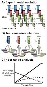 viruses free full text understanding bacteriophage specificity