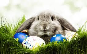 easter puns u2013from a bunny eslkevin u0027s blog