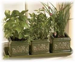 Window Sill Garden Inspiration Surprising Windowsill Herbs Designs Windows Herb Garden 35