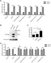 translation repression by maternal rna binding protein zar1 is