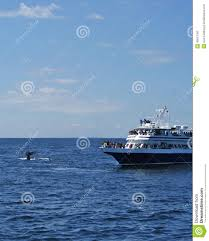 whale watching boat stock photo image 46613782