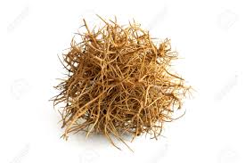 tumbleweed on white background stock photo picture and royalty