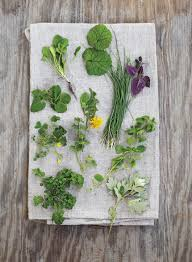 fascinating foraging edible plants backyards and plants