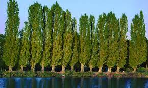 images of trees 45 wujinshike
