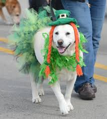 these irish dog names have their day on march 17 orlando sentinel