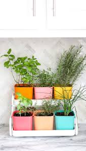 241 best indoor gardening images on pinterest indoor herbs