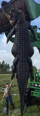 bartender resume template australia zoo crocodile feeding videos news april 16 by evergladeshub