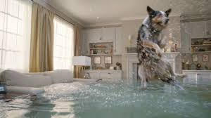 montana the flooded house dog diving competition youtube