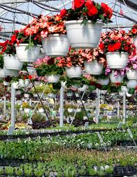 plant nursery editorial stock image image 43694164